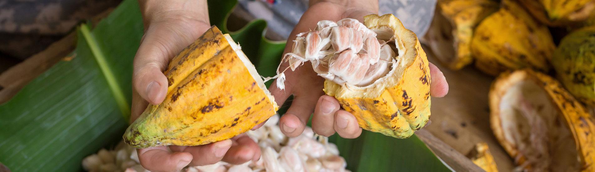 Ecuador Cocoa