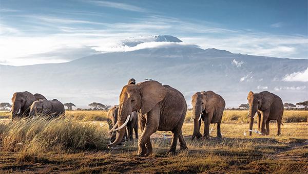 Tanzania + Kenya