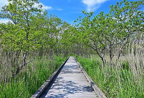 Onnenai Wooden Path