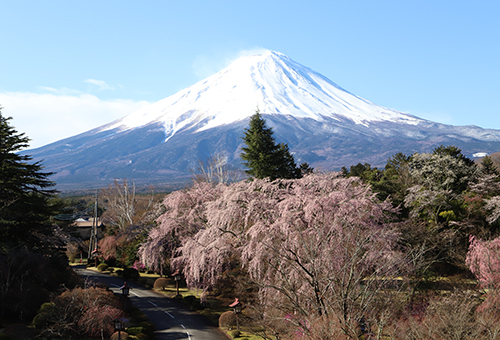 Overlook Mt. Fuji from Fuji View Hotel