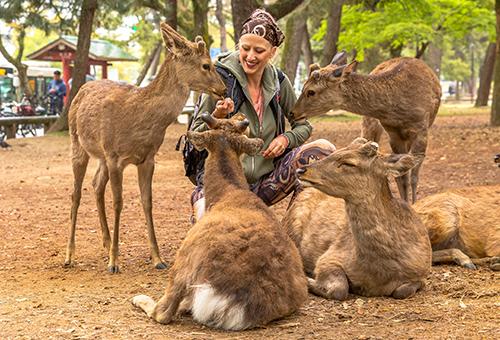 "Say ""Hello"" to deer in Nara"