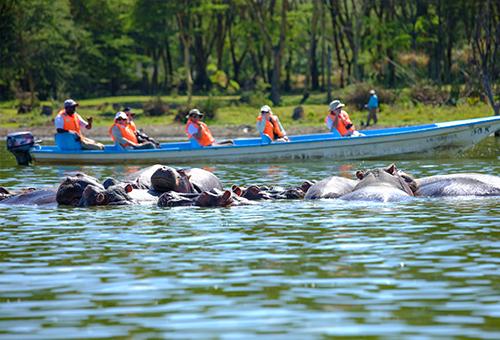 Boat Tour in Lake Naivasha